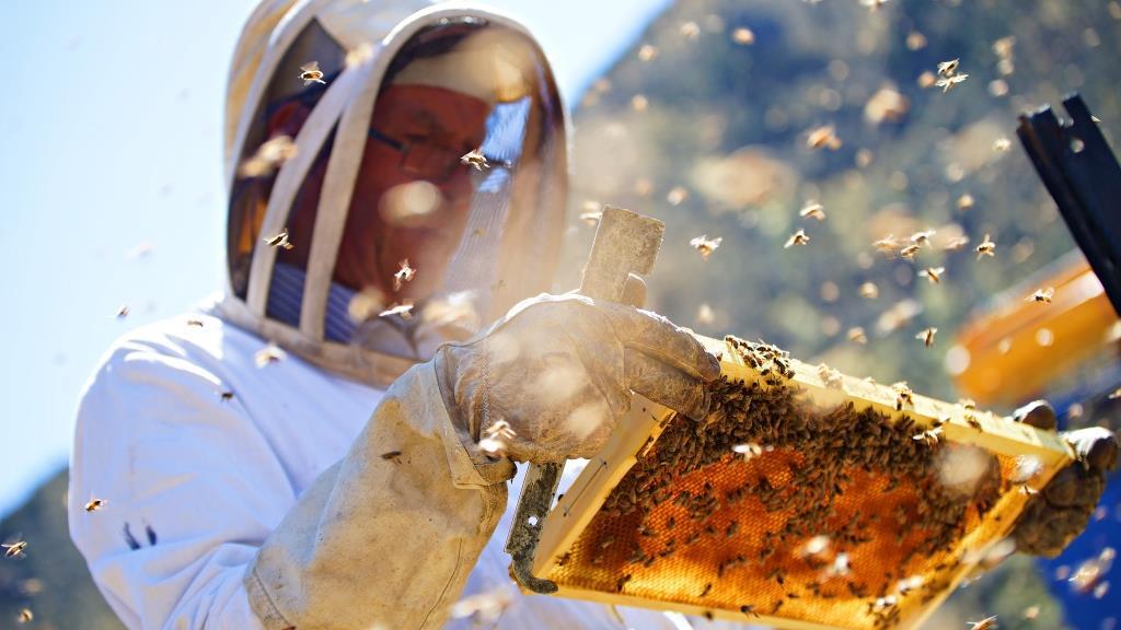 Wedderspoon Manuka Honey, Malvern, PA – 11.8 miles