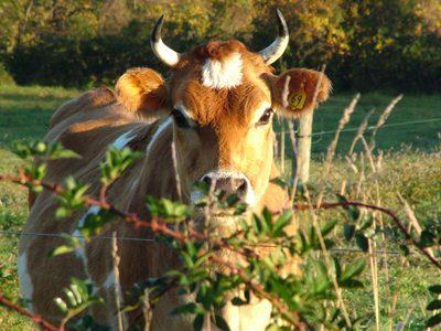 Camphill Kimberton Hills Dairy, Kimberton, PA – 11.5 Miles