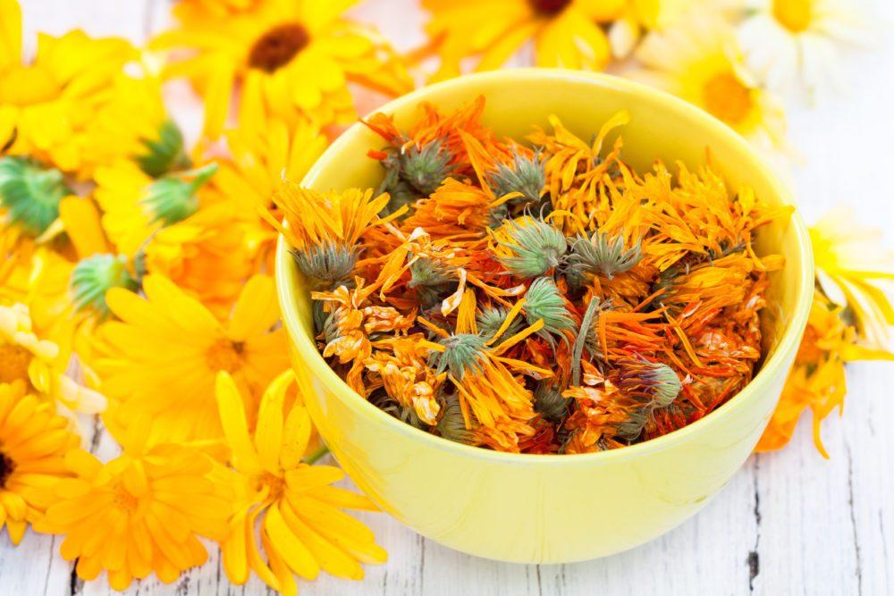 Medicinal Plants for Summer